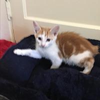 Adopt A Pet :: Aaron - Simpsonville, SC