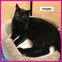 Adopt A Pet :: Twilight - Miami, FL
