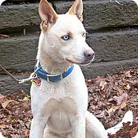 Adopt A Pet :: Blue - Conyers, GA