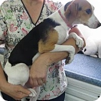 Adopt A Pet :: Lilly(ADOPTED!) - Chicago, IL