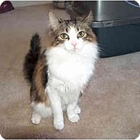 Adopt A Pet :: Pavi - Greenville, SC