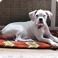 Adopt A Pet :: Rita - Woodbine, MD