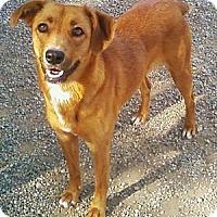 Adopt A Pet :: Reesa - Toledo, OH