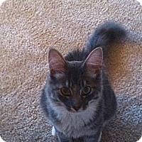 Adopt A Pet :: Sam - Arlington, VA