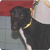Adopt A Pet :: MRK Judy's Dream  (