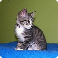 Adopt A Pet :: Roxy - Dover, OH