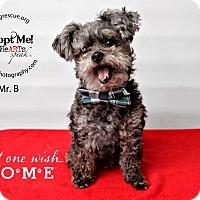 Adopt A Pet :: Mr. B - Shawnee Mission, KS