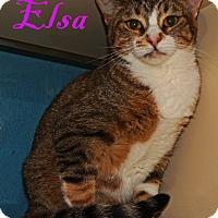 Adopt A Pet :: Elsa - Converse, TX
