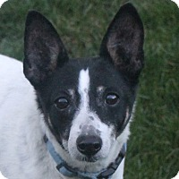 Adopt A Pet :: BJ - North Olmsted, OH