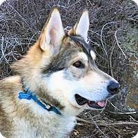 Adopt A Pet :: WOODY-Adoption Pending - Boise, ID