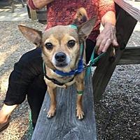 Adopt A Pet :: Poncho - Sharon Center, OH
