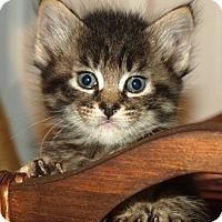 Adopt A Pet :: Lizbeth - Orange, CA