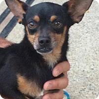 Adopt A Pet :: Kevin($150) - Redding, CA