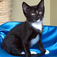 Adopt A Pet :: Blaze of Glory - St. Louis, MO