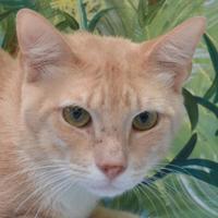Adopt A Pet :: Kidd - Englewood, FL