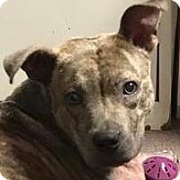 Adopt A Pet :: Echo - Bonaire, GA