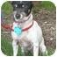 Photo 3 - Rat Terrier Dog for adoption in Carrollton, Texas - Meg