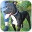 Photo 2 - Pit Bull Terrier Mix Dog for adoption in Greenville, North Carolina - Buddy
