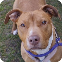 Terrier (Unknown Type, Medium) Mix Dog for adoption in Eatontown, New Jersey - Rosey