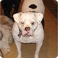 Adopt A Pet :: Big Mama - Nashville, TN