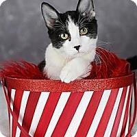 Adopt A Pet :: Hubert - Eagan, MN