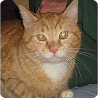 Adopt A Pet :: Georgie Boy - Jenkintown, PA