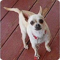 Adopt A Pet :: Peppe - dewey, AZ