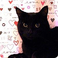 Adopt A Pet :: Milo - Albany, NY