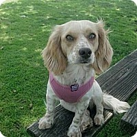 Adopt A Pet :: Melly - Encinitas, CA