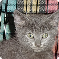 Adopt A Pet :: Sweetface - Grayslake, IL