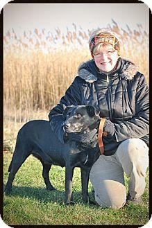 Labrador Retriever Mix Dog for adoption in Elyria, Ohio - Don Juan