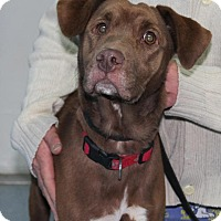 Adopt A Pet :: COCO(ADOPTED!) - Chicago, IL