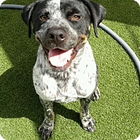 Adopt A Pet :: Fritz - Houston, TX