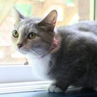 Adopt A Pet :: Girl - Burlington, NC