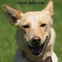 Adopt A Pet :: Nadine - Cheyenne, WY