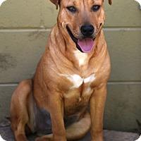 Adopt A Pet :: Hannah - Chattanooga, TN