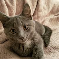 Adopt A Pet :: Mollie - Carlisle, PA