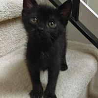 Adopt A Pet :: Batman - Melbourne, FL