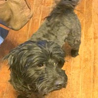 Adopt A Pet :: Charlie - Pardeeville, WI