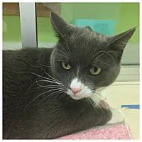 Adopt A Pet :: Doug - Chicago, IL