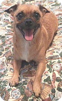 Pug Mix Dog for adoption in Orlando, Florida - Lele