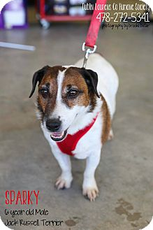 Jack Russell Terrier Mix Dog for adoption in Dublin, Georgia - Sparky