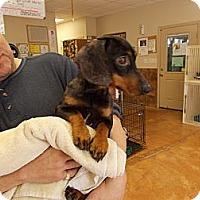 Adopt A Pet :: Hank - Heber Springs, AR