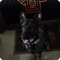 Adopt A Pet :: Remedy - Green Cove Springs, FL