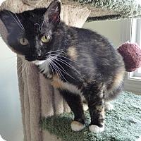 Adopt A Pet :: Kenna - Edmonton, AB