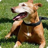 Adopt A Pet :: Marietta - Midland, TX