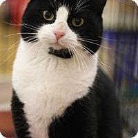 Adopt A Pet :: Felix - Sacramento, CA
