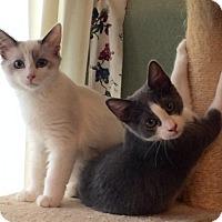 Adopt A Pet :: SOPHIE - Brea, CA