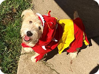 Terrier (Unknown Type, Medium) Mix Dog for adoption in Cleveland, Ohio - Harry Pterodactyl