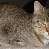Adopt A Pet :: Minnie - brewerton, NY